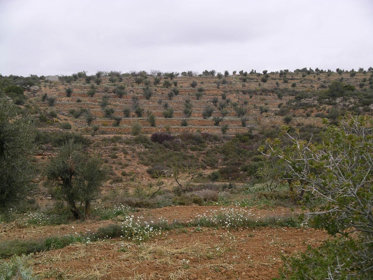 Terrazak Kataluniako Garrotxa eskualdean