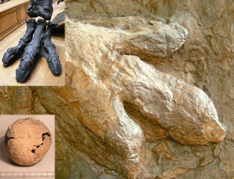 Hezur fosila, arrautza fosila eta oinatz fosila
