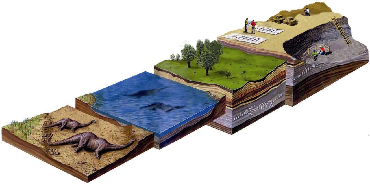 Animalia hil, lurpean geratu, fosildu eta paleontologoek aztarnategian haren fosila aurkitu eta aztertu arteko bidea