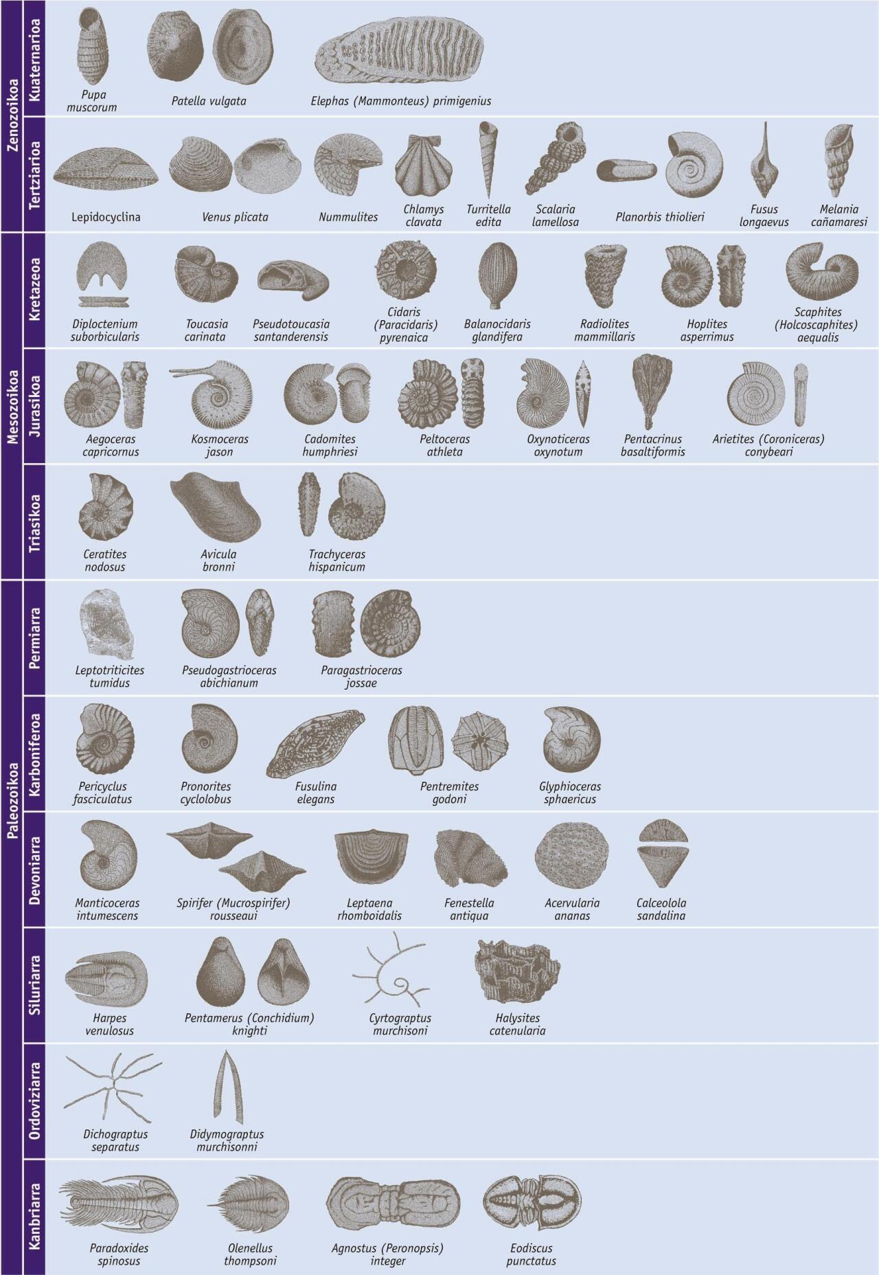 Taula estratigrafikoa fosil bereizgarriekin