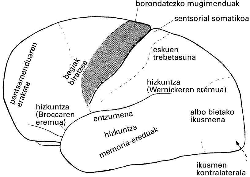 Garun-azaleko eremu funtzionalen kokapena