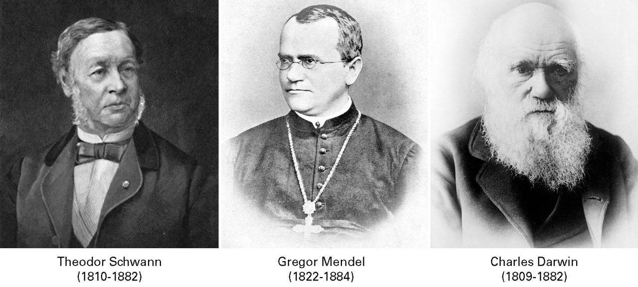 Biologiaren hiru teoria orokorren aitak: T. Schawnn (Teoria zelularra): G. Mendel (Herentziaren teoria); eta Ch. Darwin (Eboluzioaren teoria)