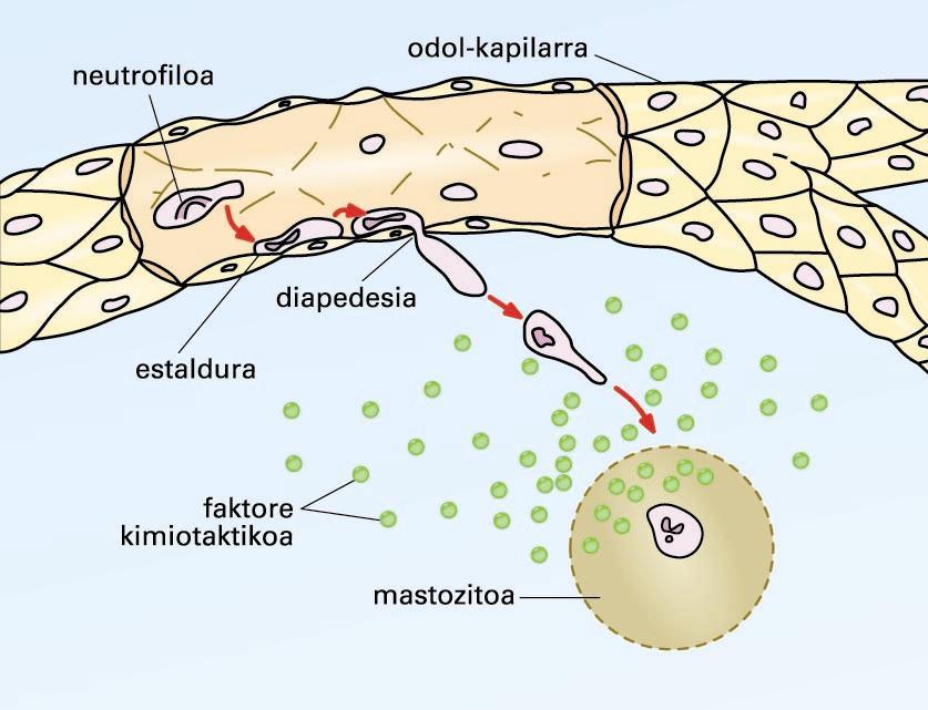 Kimiotaxia-prozesua